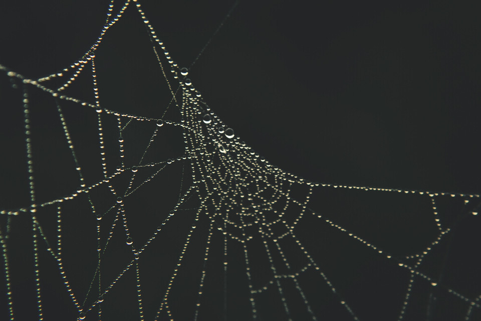 #nature #spiderweb #waterdroplets #crisp #shadows #drama  #outandabout  #photography