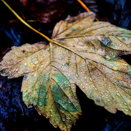 leaves leavesfall nature photography