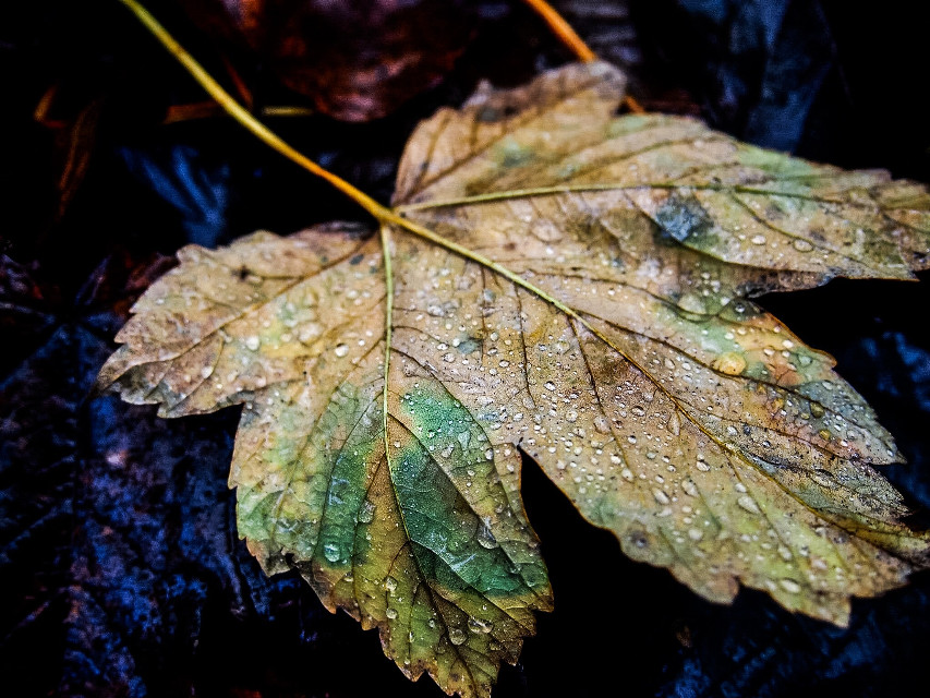 Autumn #leaves#leavesfall #nature #photography