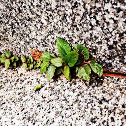 macro plant marble iclicks