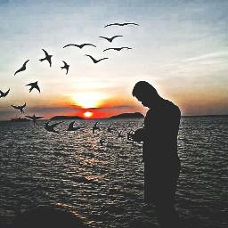 sunsetsilhouette love nature photography