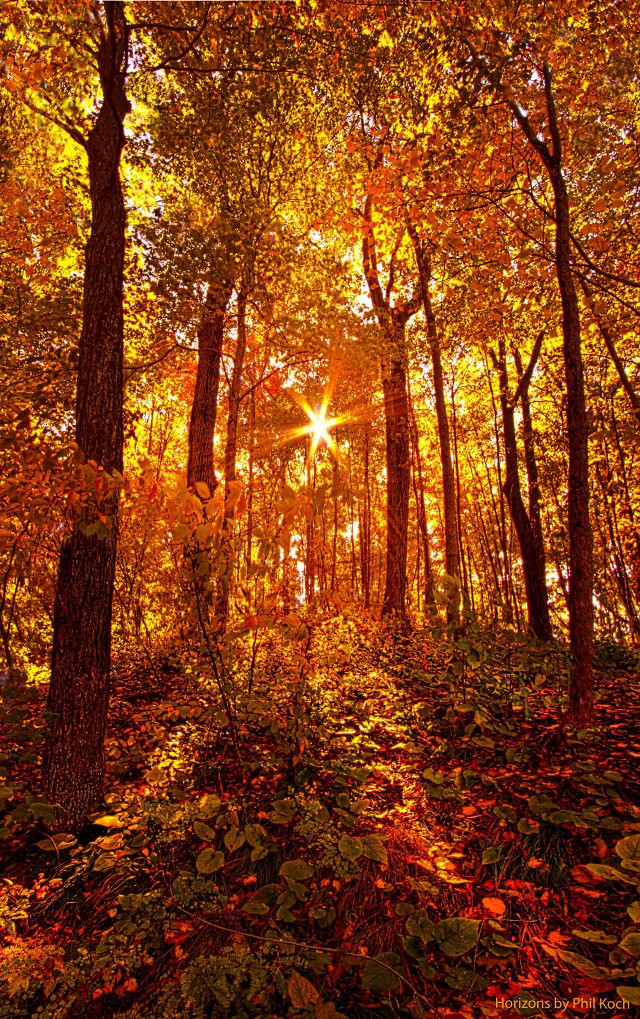 Not all that wander in a forest are lost. Some of us are just looking for firewood.  Horizons by Phil Koch.   #hike #autumn #Nature #FallColors #fall #orange #sunrise #trees #hike #light #colorful