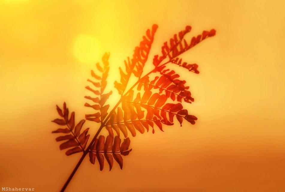 #photography #leaves #nature #orange #bokeh #photoblend #photoblending #sunnyeffect