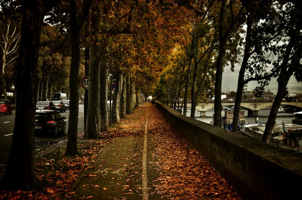 #autumn #paris #goldencity