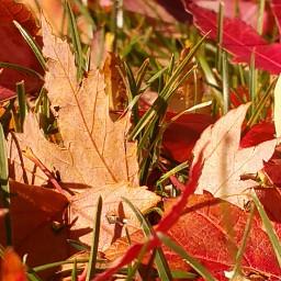 nature autumn leaves colorado fallcolors