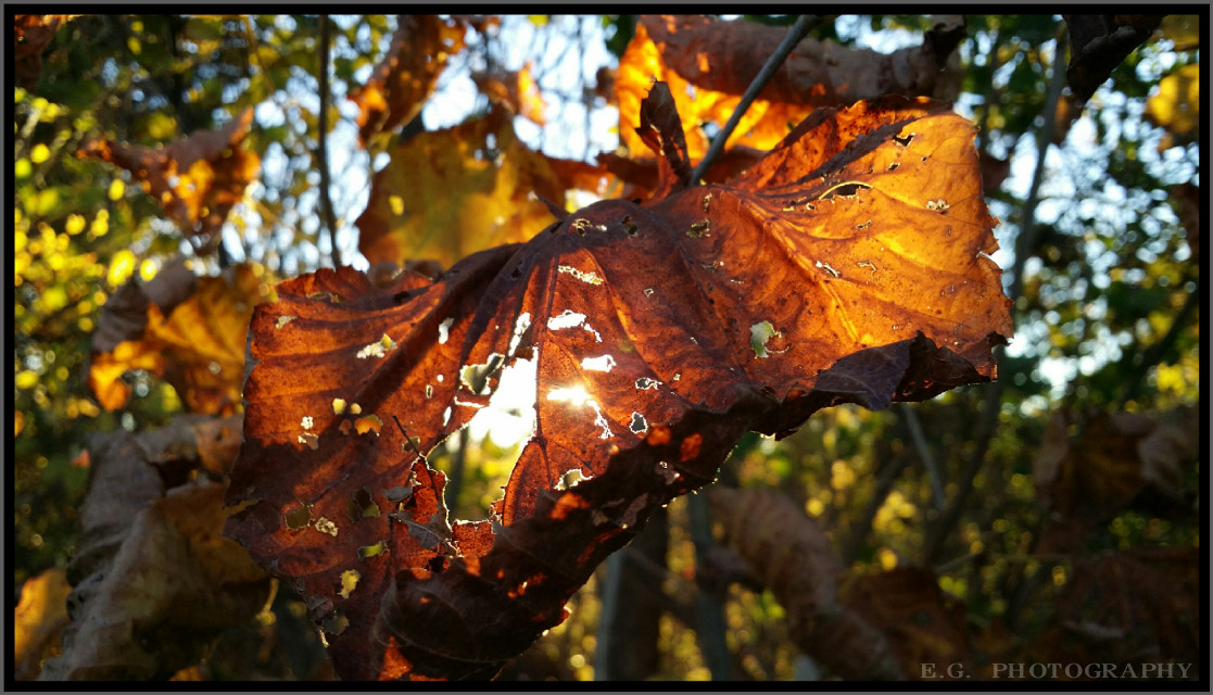 #leaf #unedited #autumn #photography #sun Had to get some sun snaps for SUNday 🌞🍁