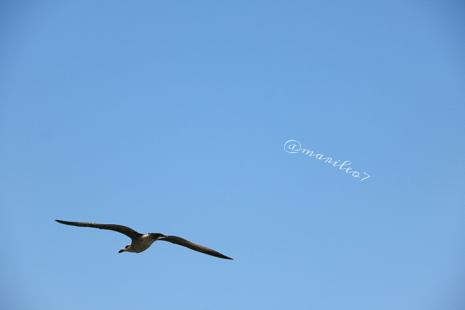 Sometimes you have to let  go..  and be free  💕   #sky #freedom #nature #bird #photography #travel  #blue