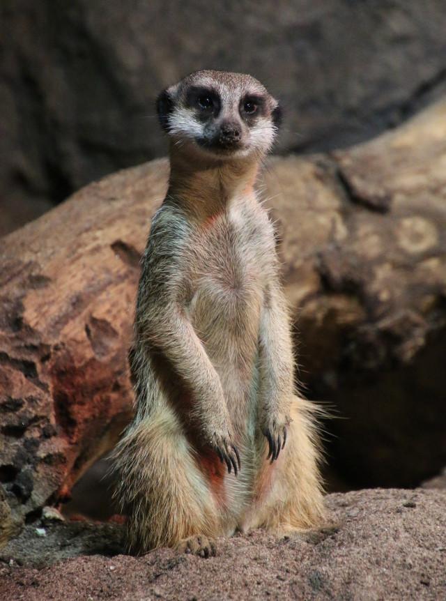 #animal #photography #petsandanimals #nature
