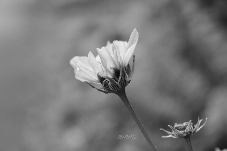 #blackandwhite #flower #nature #photography #closeup