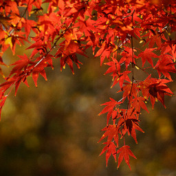 nature colorful red photography