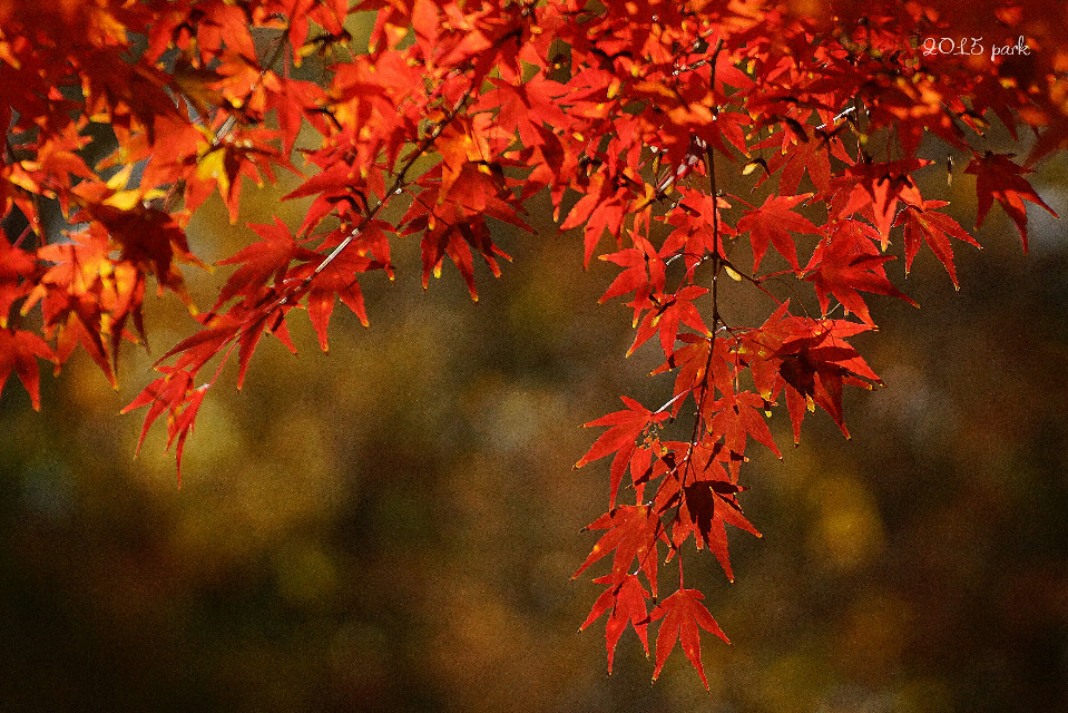 #nature #colorful # tree  #red  # autumn  #photography 💕