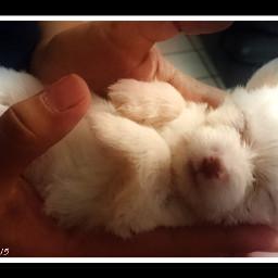 bebémascota beb