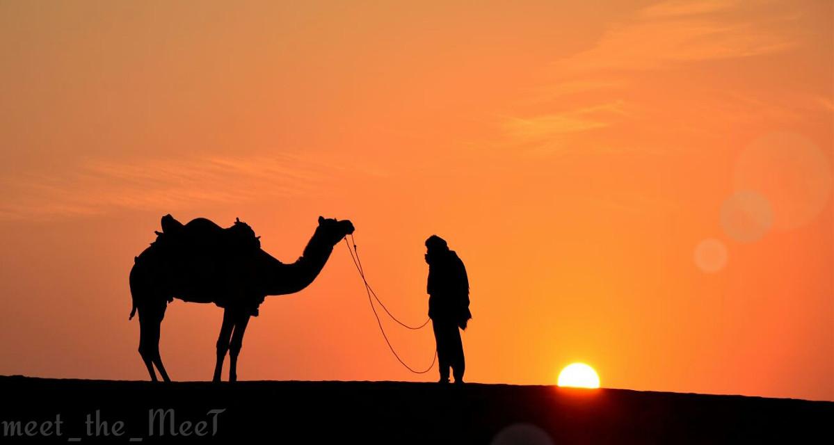 #Desert #Camel #Man #Sunset #TowardsHome