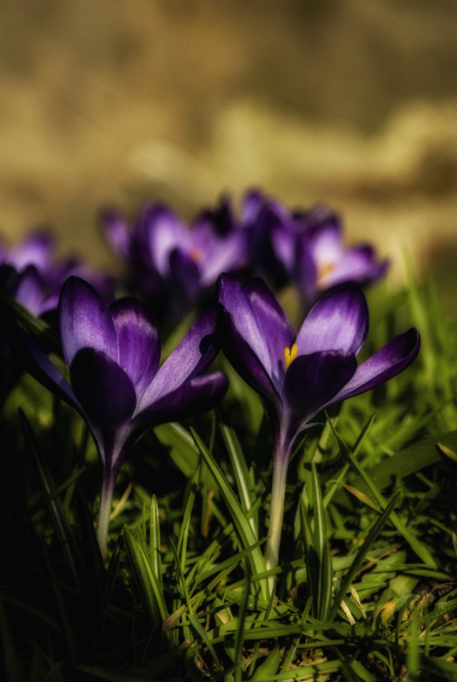 Spring, it won't be long. #photography  #nature  #flowers