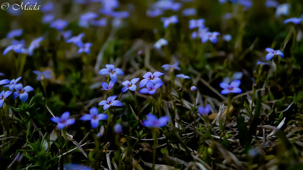 #oldphoto #nature #flowers #colorful #violet #field #beautiful #followme #photography #summer  #purple