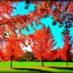 nature fall