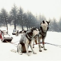 wppanimals snow winter travel petsandanimals