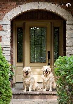 goldenretriever architecture luxury brother
