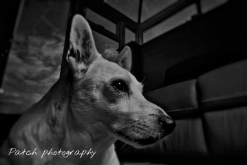 photography petsandanimals