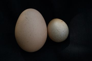 freetoedit photography large eggs contrast