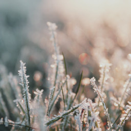 snow cold bokeh