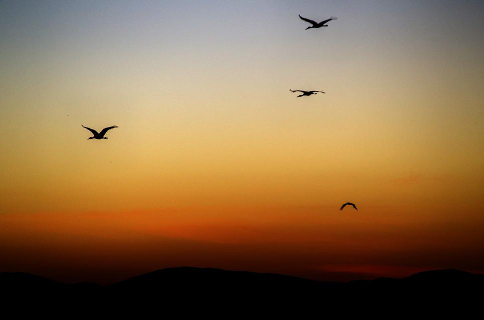Aves de paso #colorful  #petsandanimals  #nature  #winter  #photography