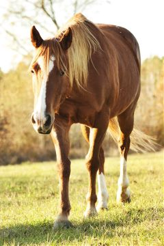 horse interesting nature photography petsandanimals