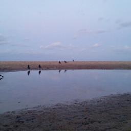beach hdr petsandanimals birds