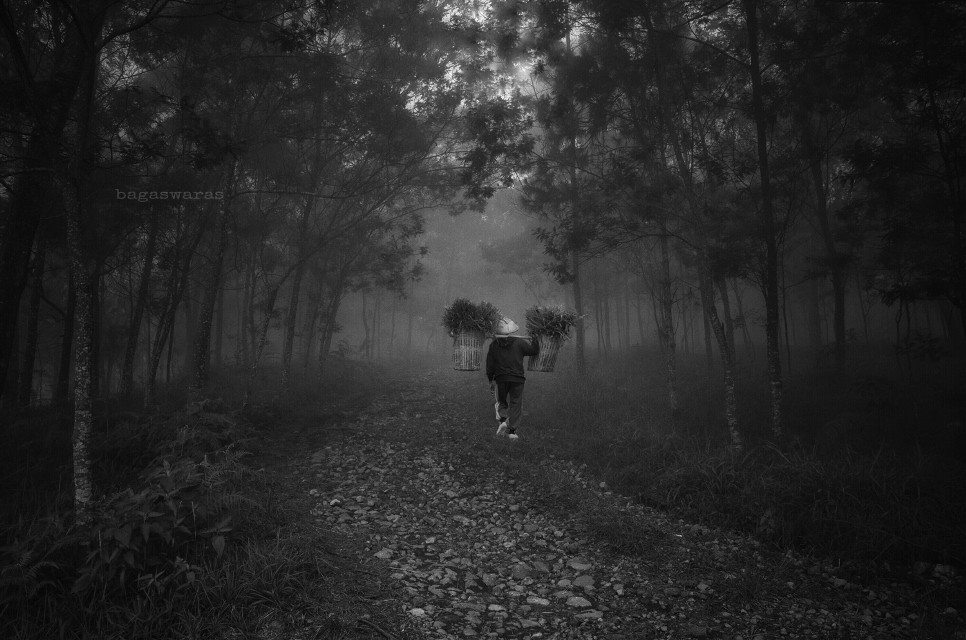Black Forest   #travel #blackandwhite #vanishingpoint #people #fog #photography