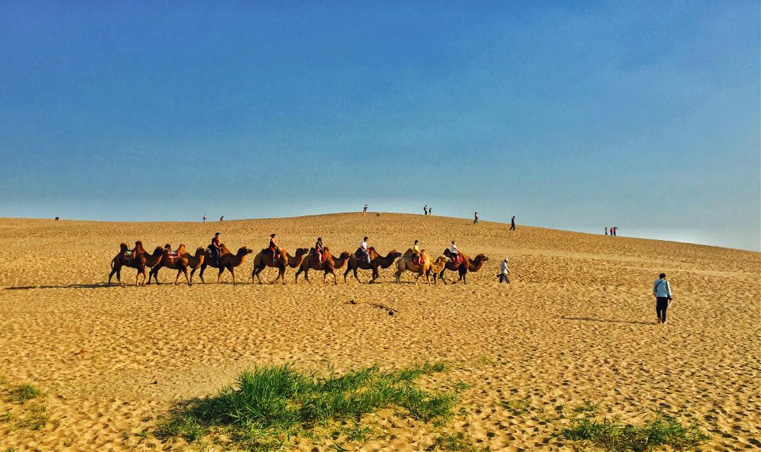 沙漠之舟 #nature #travel #summer