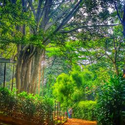 tree love nature photography photooftheday