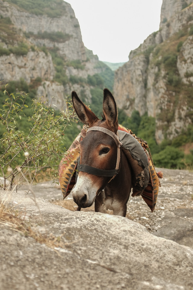 #freetoedit  #hyunot #canyon  #artsakh #armenia #photography #nature #petsandanimals #summer #travel  #donkey #ishuk #myfavoritdonkey