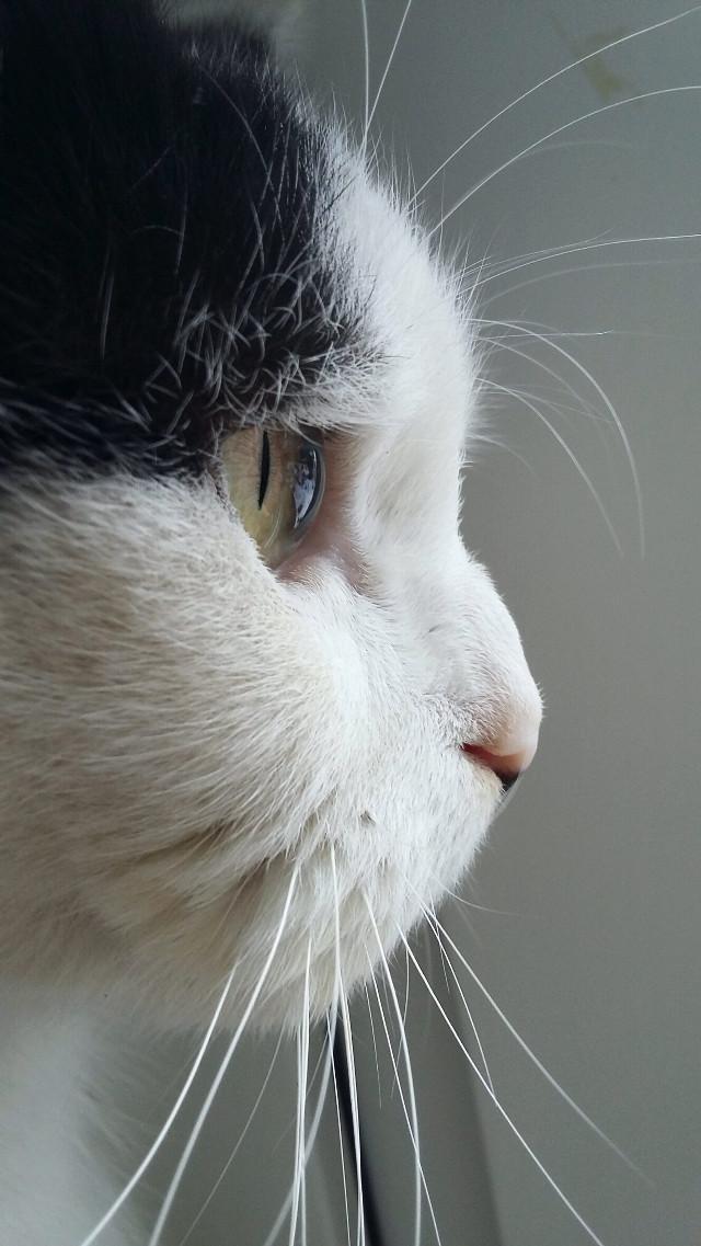 🐈🐈🐈  #cat #eye #white #pet #animal #blackandwhite #cute
