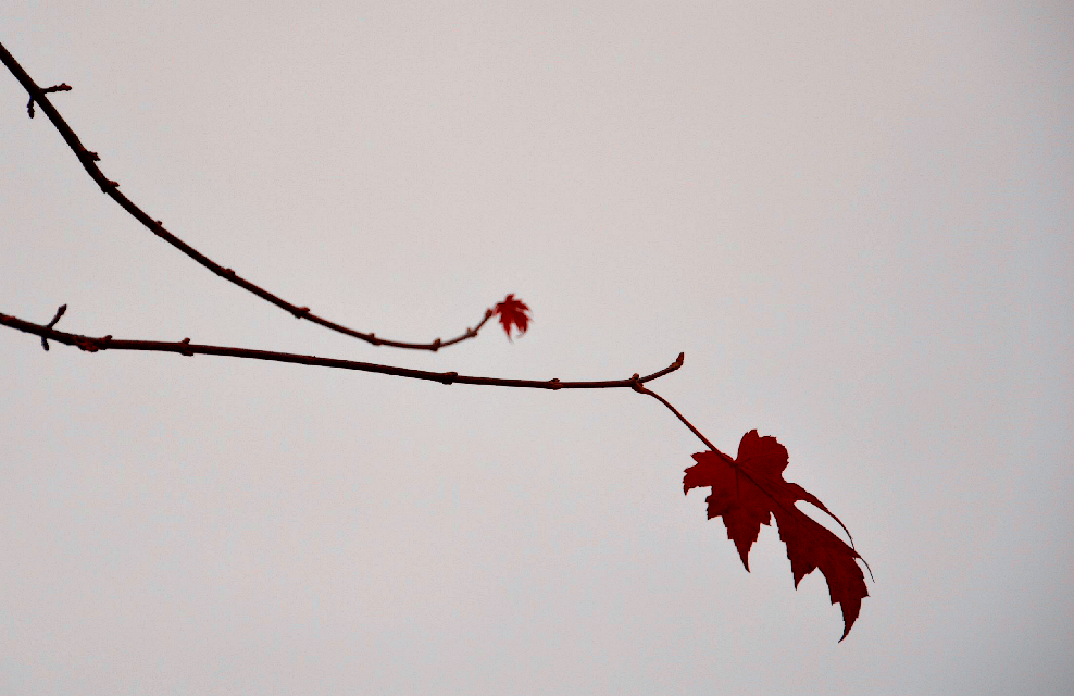 #keepitsimple #nature #photography