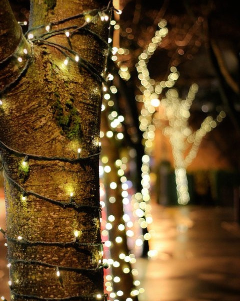 Missing Christmas #winter #nature #outdoors #bokeh #light #nightphotogrqphy