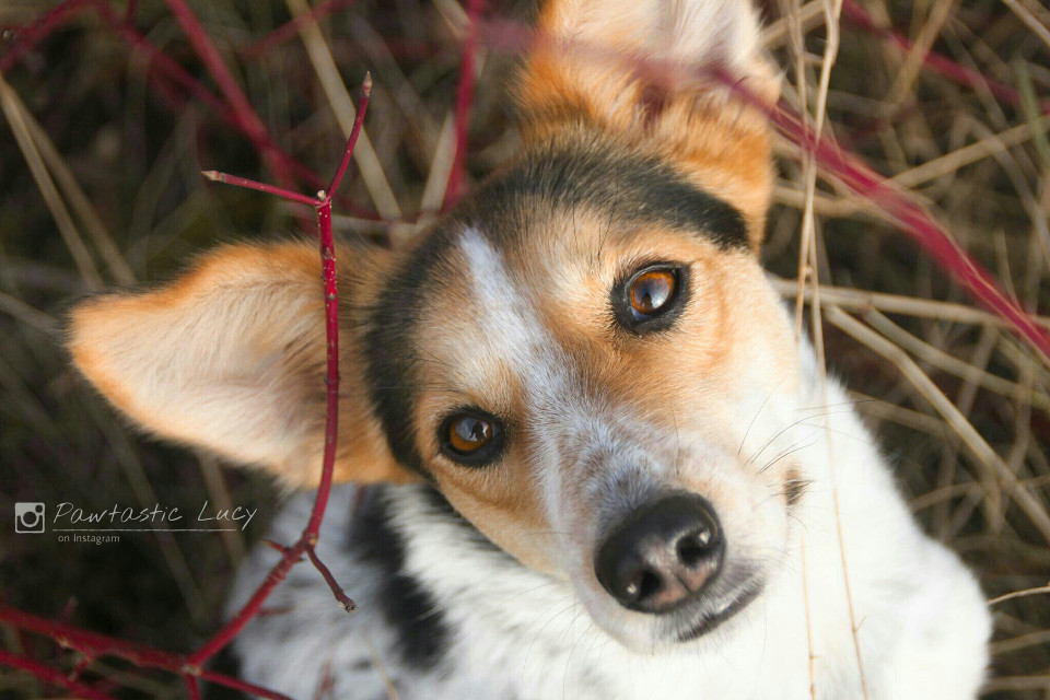 That's my dog Lucy. She is 4 years old and was a romanian streetdog. Now she lives in germany with me. I start to photograph winter 2015 and I hope you like my pictures   #cute  #dog #photography #petsandanimals