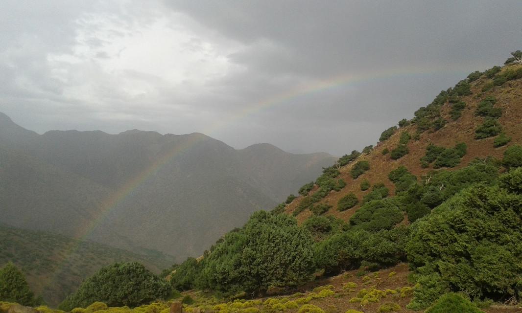 #over #the rainbow