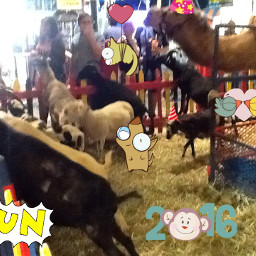 wappartyanimals partyanimals pettingzoo party animals
