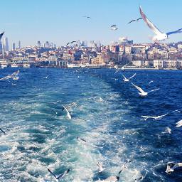 seagulls waves buildings Be