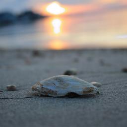 freetoedit seasidenj sunset photograpghy gopro