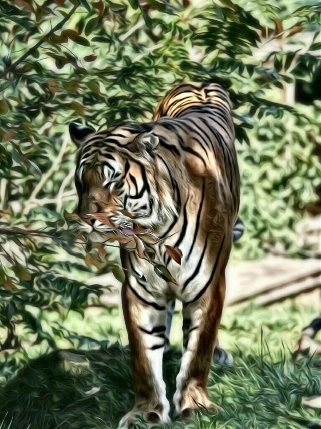 #nature #petsandanimals #animal #beauty #france #cat #cats  #feline #tiger My picture  Wonderful tiger EGO