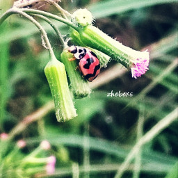 #photograpy #macro mobilephotograpy macro