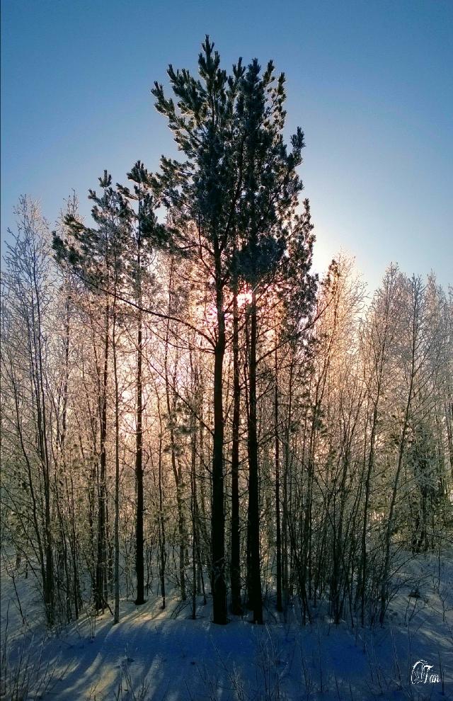 #tree #sunrise #nature #photography