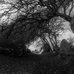 mist tree trees tree_brilliance tree_captures