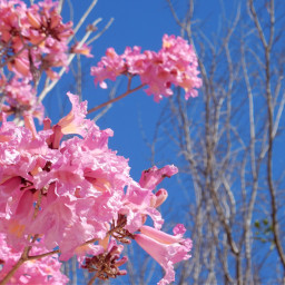blueskys flowers florida