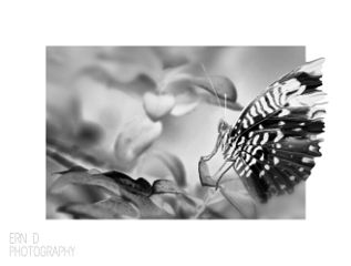 blackandwhite photography nature butterfly border