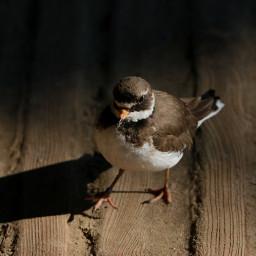 sunnyeffect bird photography nature petsandanimals