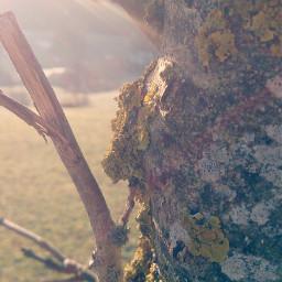 tree nature sun spring makro