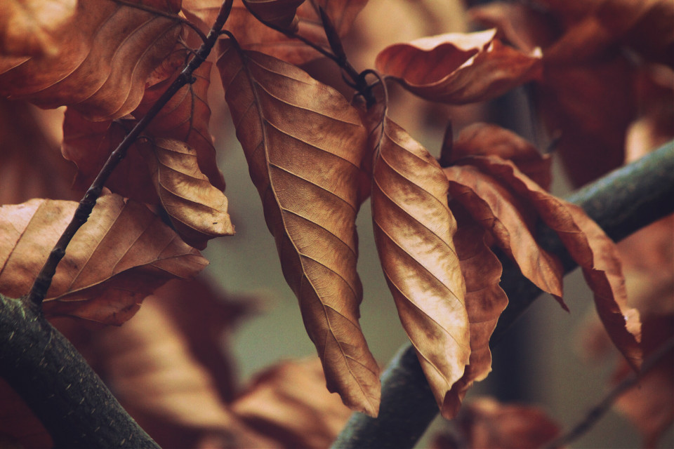 #nature #leaves #outandabout #adjusttool #warmcolor #photography