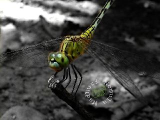 photography petsandanimals nature colorsplash